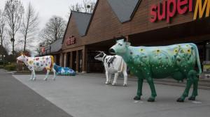 _LEP1128 - Les vaches du mont St-Michel