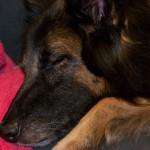 _LEP5688 - Notre ti-gars est fatigué de sa grosse journée, plein d'émotion!