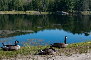 Un des nombreux lacs du domaine
